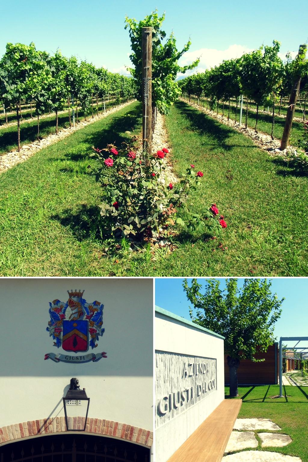 azienda-agricola-giusti-wine-degustazioni-nervesa-della-battaglia