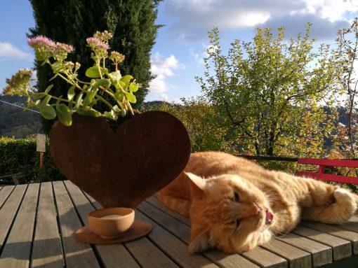 Agriturismo-le-noci-dove-dormire-tarzo