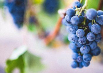 Cantine-paladin-wine-tasting