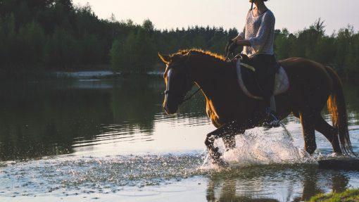 Equitrek-escursione-cavallo-piave