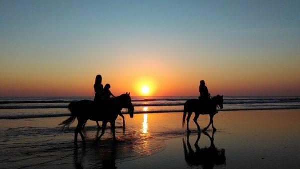 Equitrek-escursione-cavallo-spiaggia