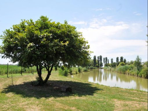 Sportyland- hotel where to stay in Caorle