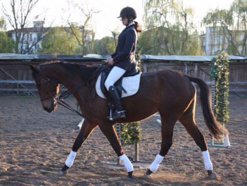 Equitrek-horse-riding-eraclea-jesolo