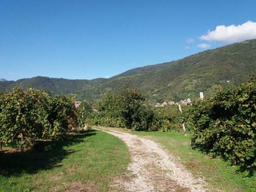 Escursioni colline Prosecco Valdobbiadene