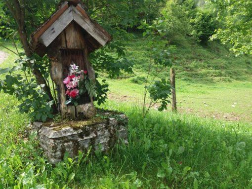 Prati fioriti narcisi di Lentiai