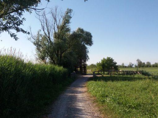 escursioni laguna venezia