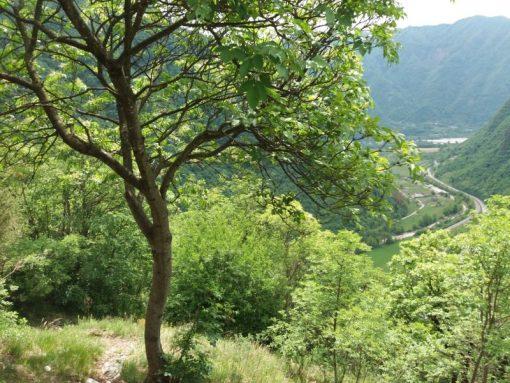 Rocchetta del Monte Miesna 1